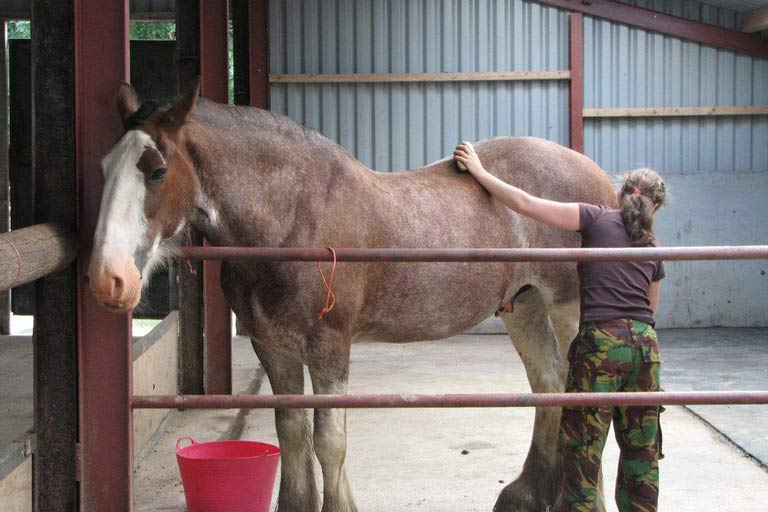 Horse sitting while farm sitting