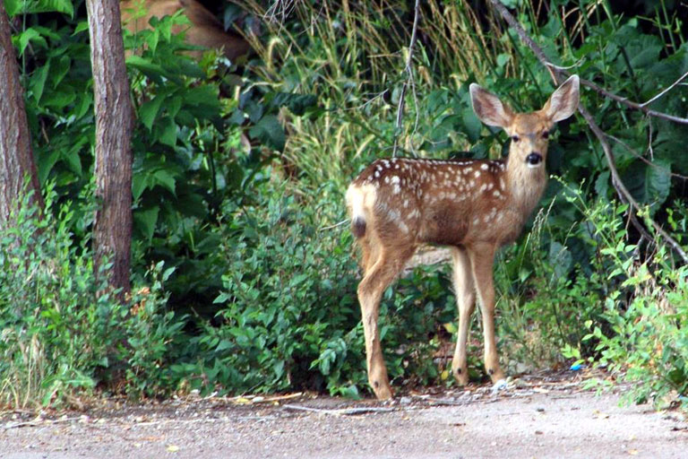 Fox Run Park, North Colorado Springs / Black Forest