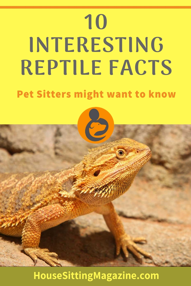 10 Interesting Facts About Reptiles Pet Sitters Might Like to Know #petsitting #reptilepetsitters #reptiles #reptileawareness #petsittingreptiles