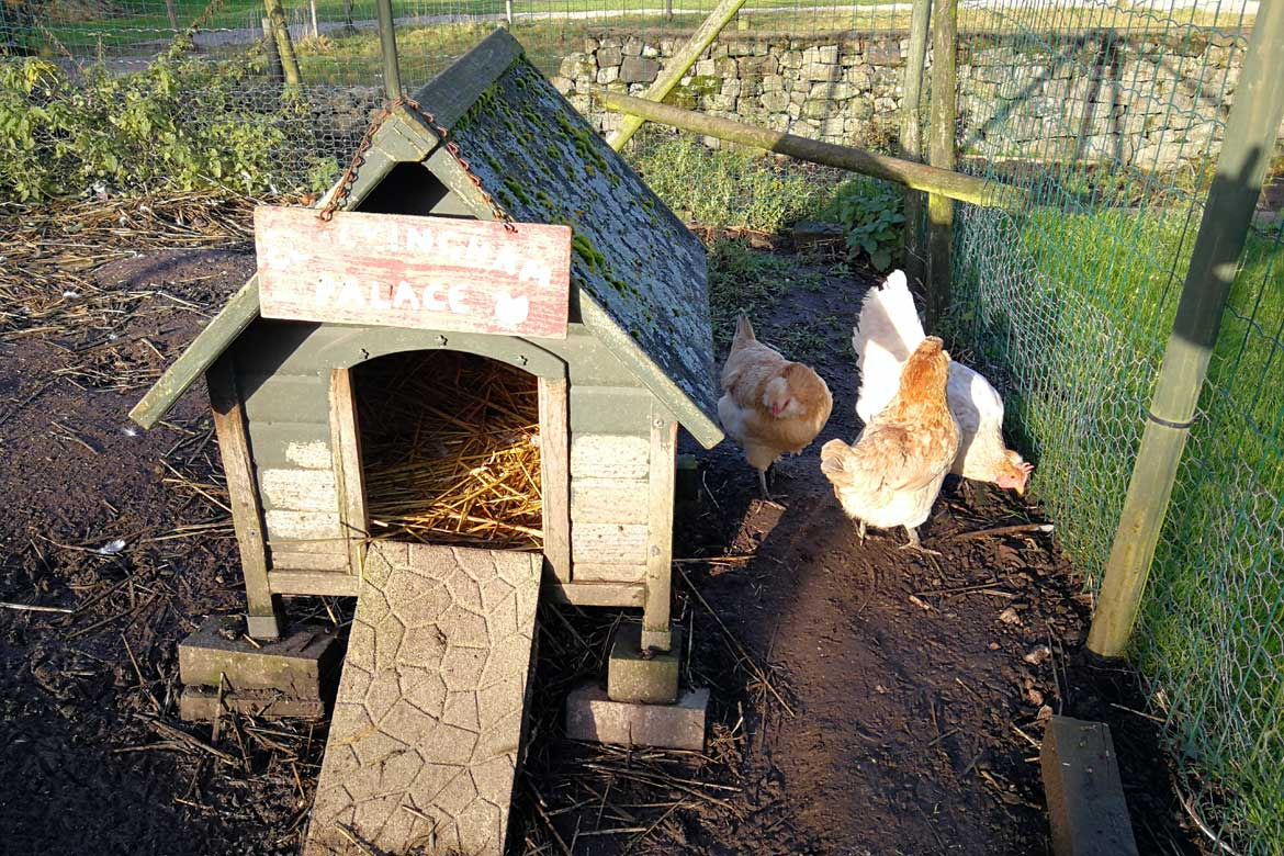 House Sitting with Chickens UK