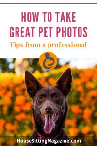 Pet Photography - How to take great pet photos #petphotos #petpix #petsitting #housesittingprofile
