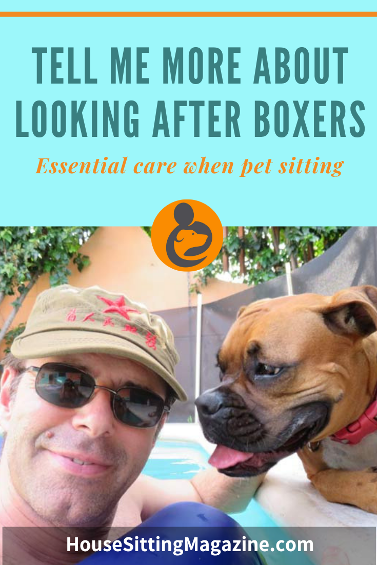 Tell me about looking after Boxers while #housesitting and #petsitting
