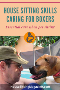 Pet Sitting with Boxer Dogs - Care Information #petcare #boxerdogs #boxers