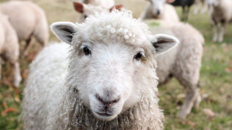 Livestock skills for house sitters