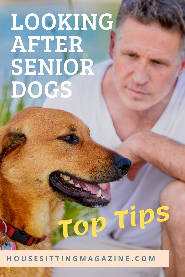 Pet Sitting with Older Dogs #housesitting #seniordogs #petsitting #petcare