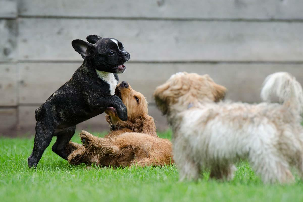 Dog manners in dog park