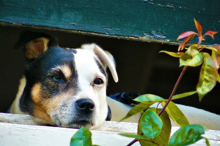 Pet sitting anxious dogs