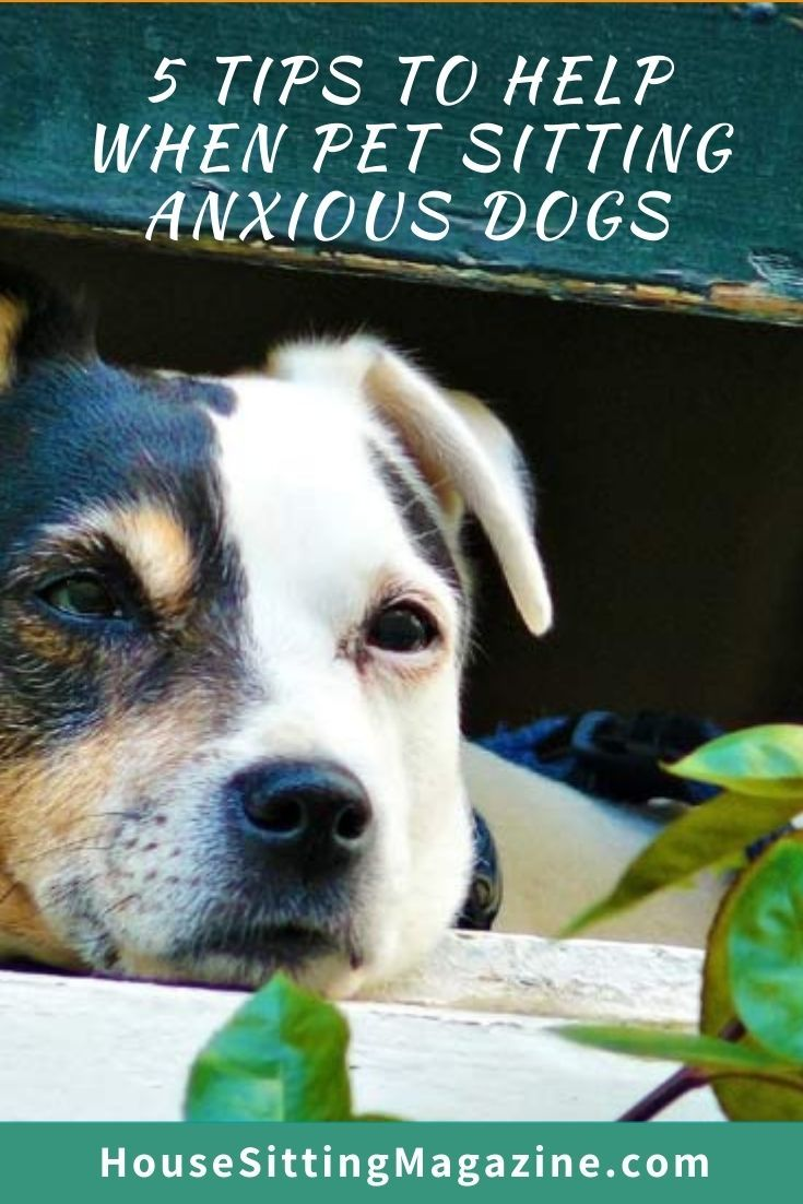 House and pet sitting with anxious dogs - 5 tips to help #petsitting #anxiousdogs #housesitsanxiousdogs