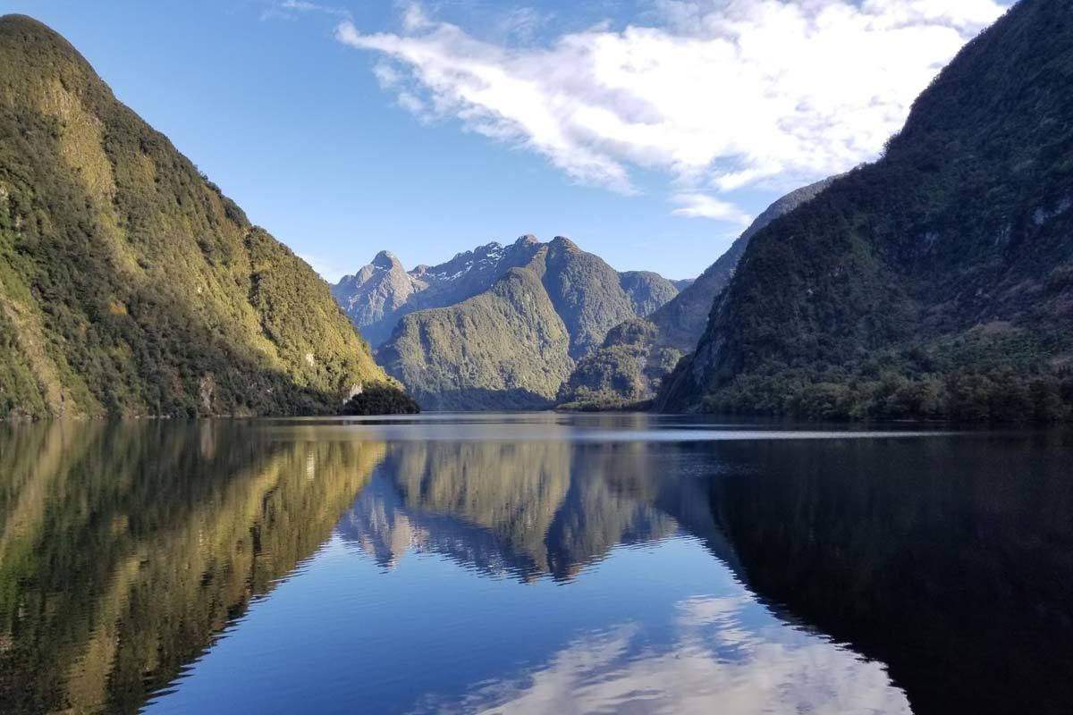 house sitting in new zealand