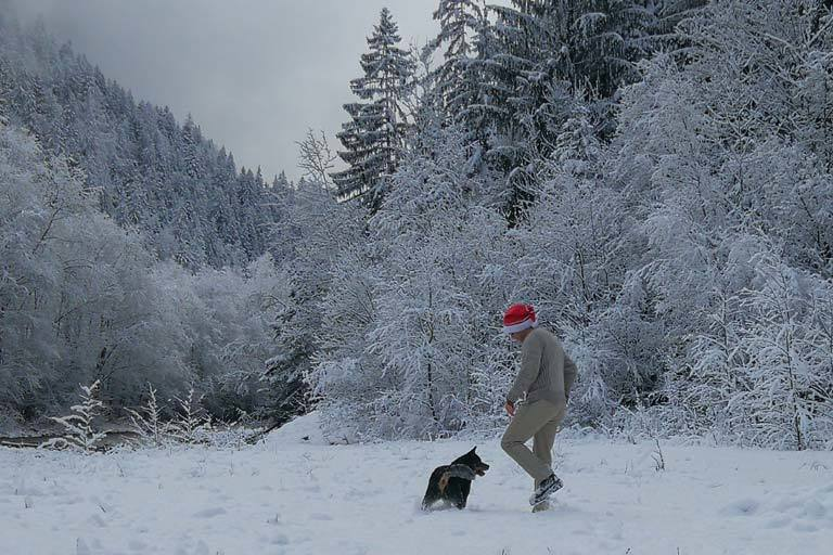 Christmas morning fun in the snow with australian cattle dog