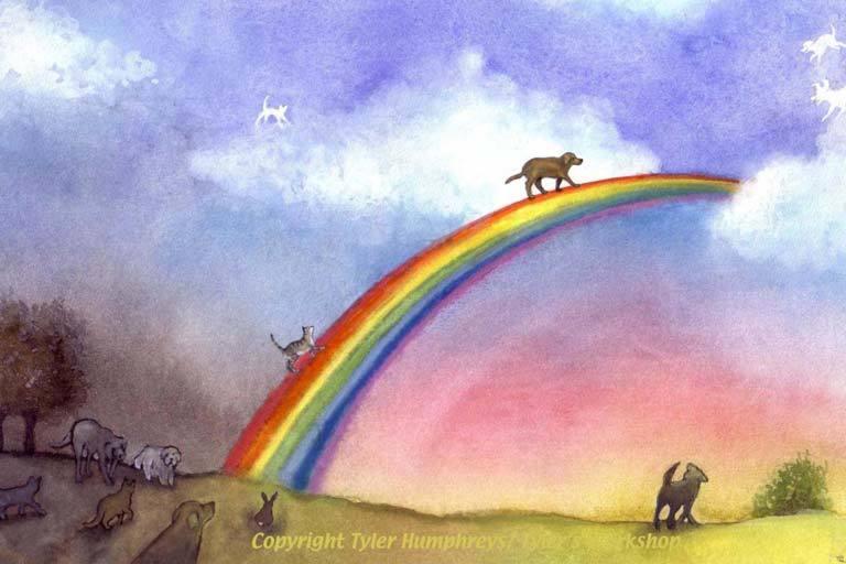 Crossing the rainbow bridge - how to respond