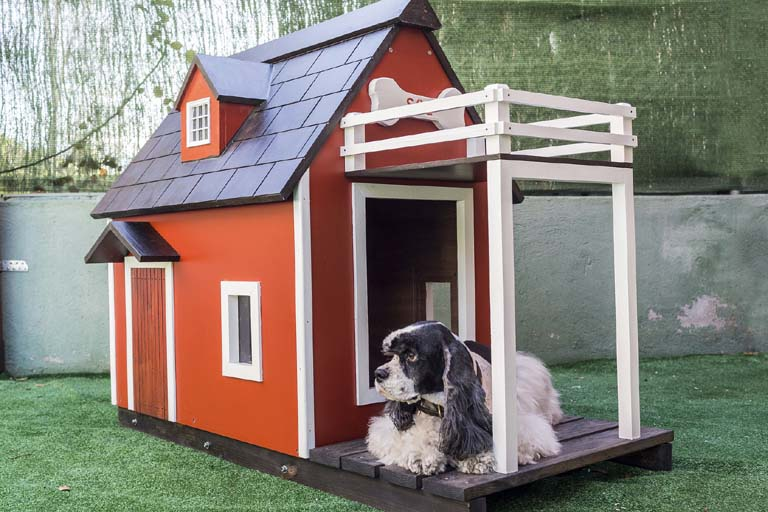 prepare your home for pet sitters